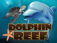 Риф Дельфина